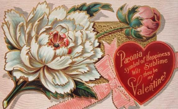 Victorian Peony Flower Valentine Postcard