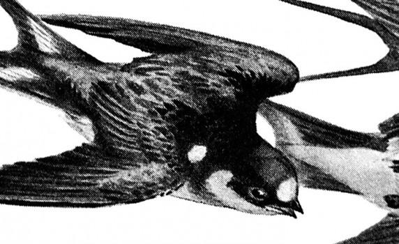 vintage-birds-thumb