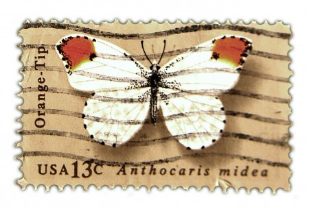 Vintage Postage Stamp Art - 1977 Butterfly Issue Orange Tip