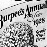 Vintage Burpee Seed Catalog Ad from 1928