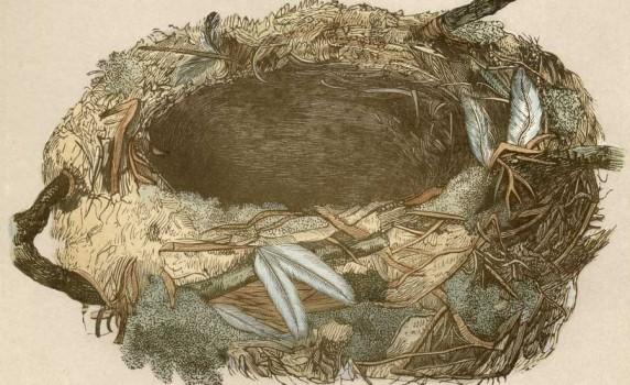 vintage-bird-nest-thumbnail