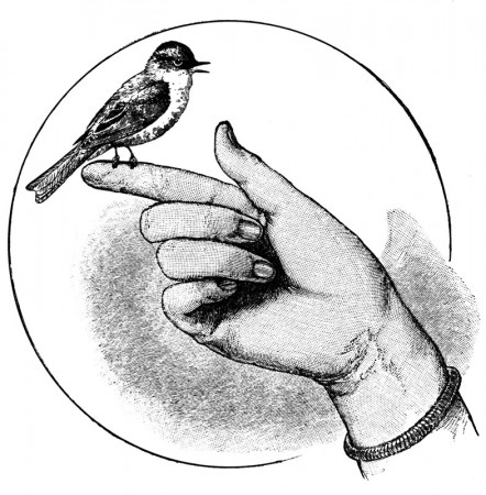 Vintage Illustration of a Bird Perched on a Finger