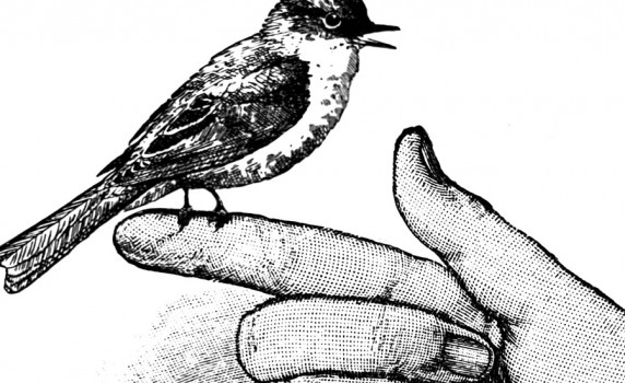 vintage-bird-picture-thumbnail