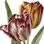 Vintage Spring Flowers Botanical Clip Art