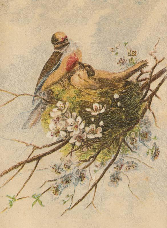 Beautiful Vintage Birds Art Print