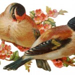 Pretty Victorian Era Vintage Birds on an Apple Tree Blossom Branch