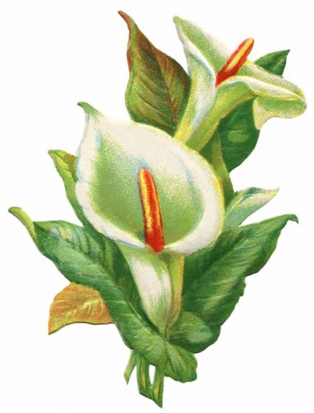 Vintage Easter Lily Clip Art - Click for printable larger image