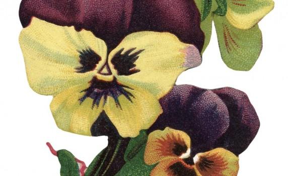 vintage-pansy-flowers-thumb