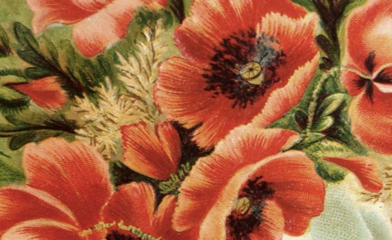 vintage-poppy-bouquet-thumb