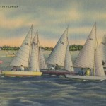 Cool Vintage Florida Postcard of a Sailboat Race