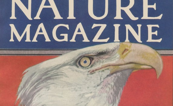 vintage-patriotic-eagle-art