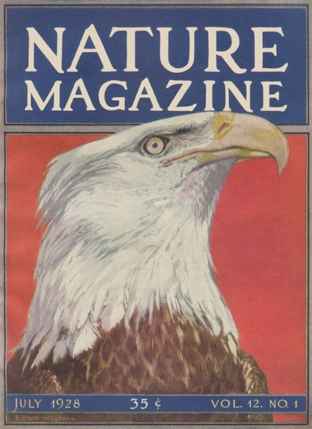 Vintage Patriotic Eagle Nature Magazine Cover from 1928 - Click for printable image