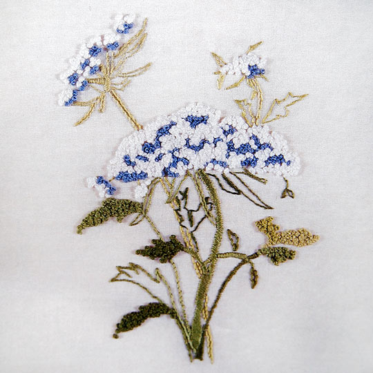 Vintage Embroidery Pattern of Queen Anne's Lace