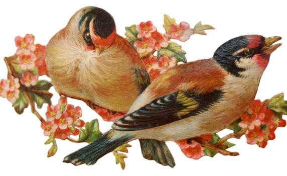 Vintage Victorian Birds Die Cut Clip Art - Click for larger printable artwork