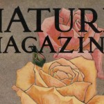 Vintage Yellow Pink and Red Roses 1928 Nature Magazine Cover
