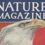 Beautiful Bald Eagle Painting on a Vintage Nature Magazine Cover